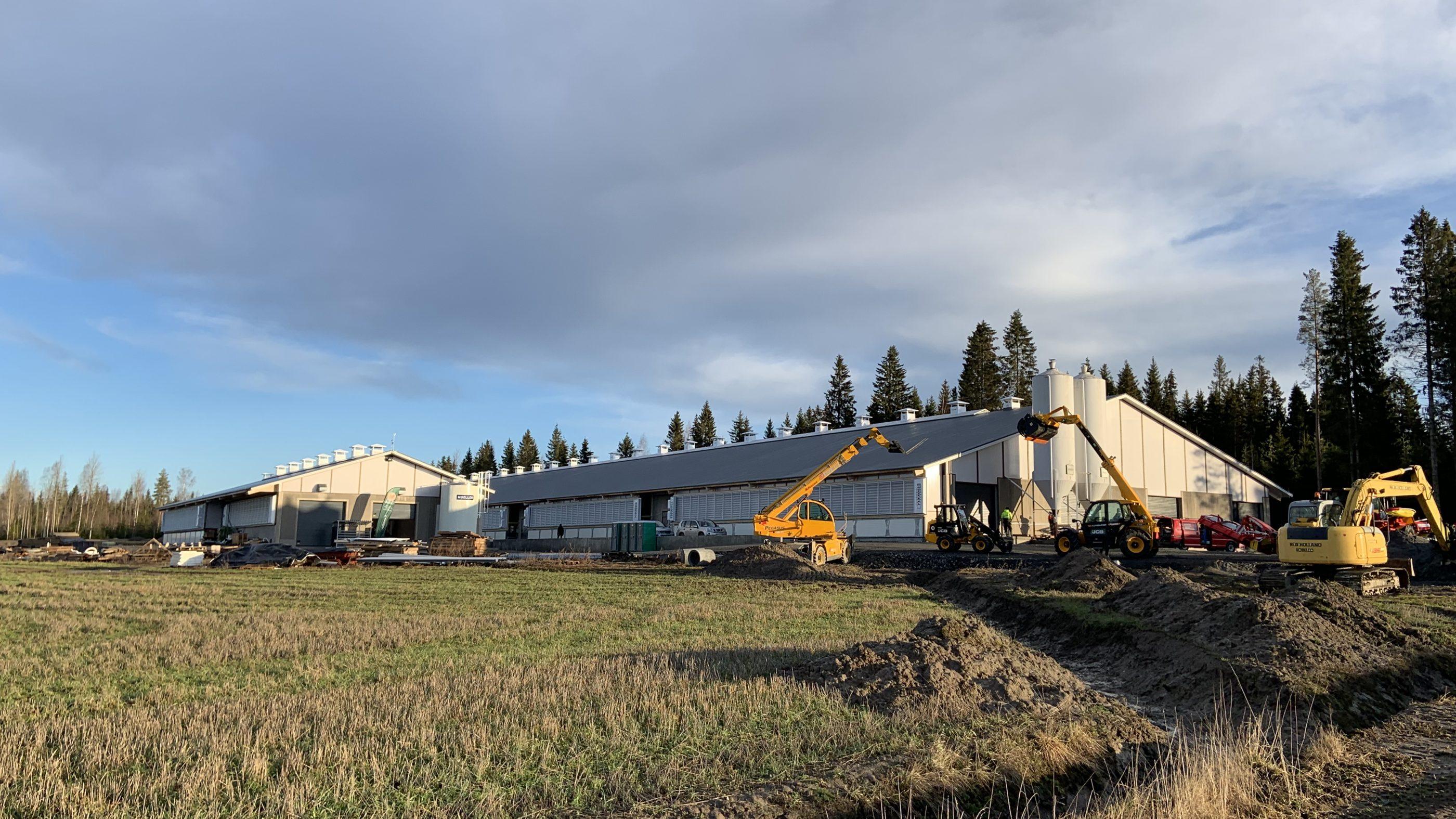 Viinamäki farm i Jalasjärvi, nybygge